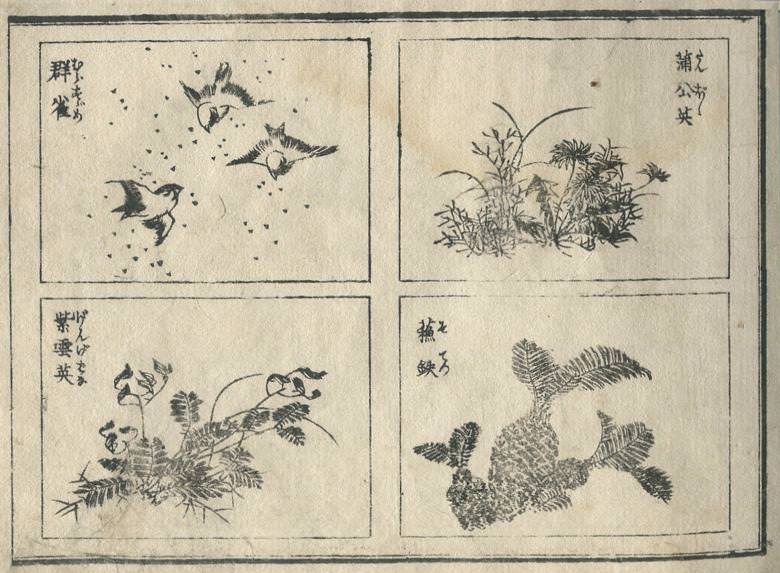 """sparrow"", a ""dandelion"", ""Astragalus sinicus"", and a ""Japanese sago palm"" are drawn."