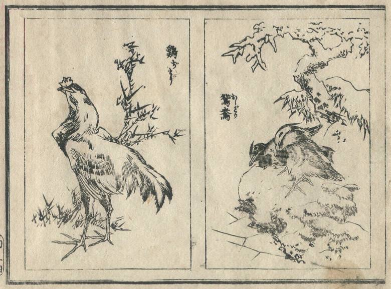 """The """"hen"""" and the """"mandarin duck"""" are drawn."""