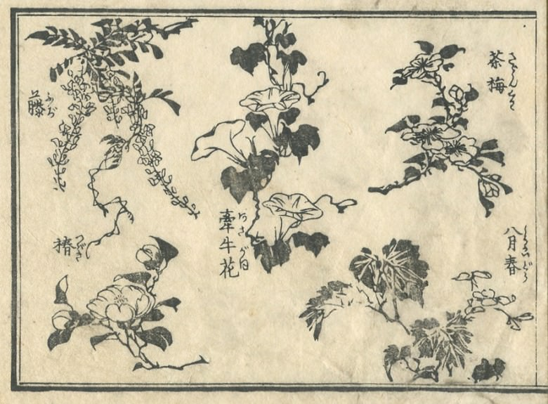 The picture in which Wisteria, a camellia, Asiatic dayflower, etc. were drawn