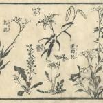 花鳥圓式12(kachouenshiki 12)
