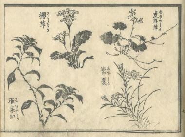 花鳥圓式13(kachouenshiki 13)