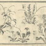 花鳥圓式14(kachouenshiki 14)
