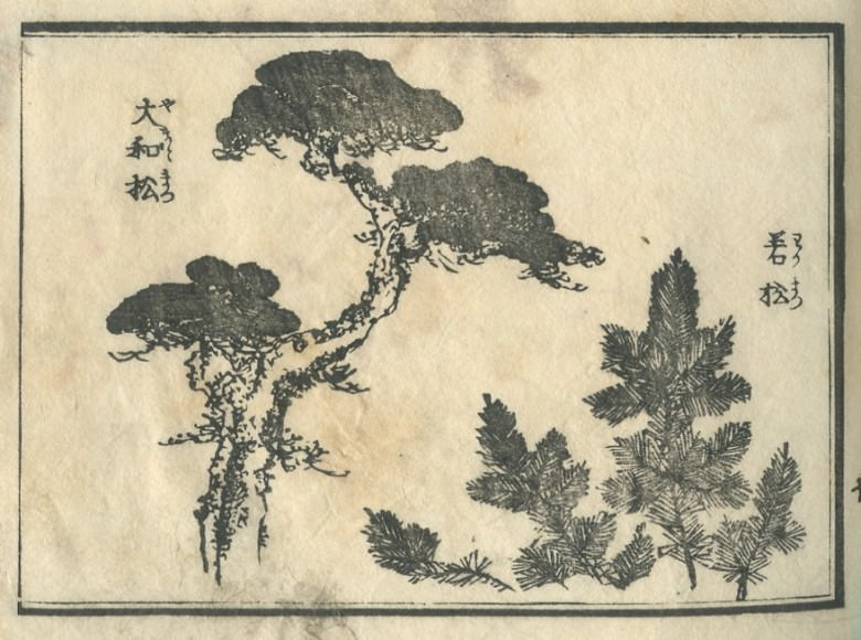 "The ""大和松"" and A young pine are drawn"