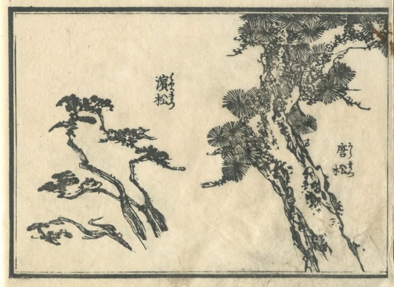 """濱松"" and a ""Larix kaempferi"" are drawn."