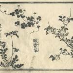 花鳥圓式21(kachouenshiki 21)