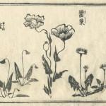 花鳥圓式22(kachouenshiki 22)