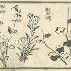 花鳥圓式23(kachouenshiki 23)