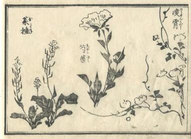 花鳥圓式24(kachouenshiki 24)