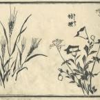 花鳥圓式25(kachouenshiki 25)