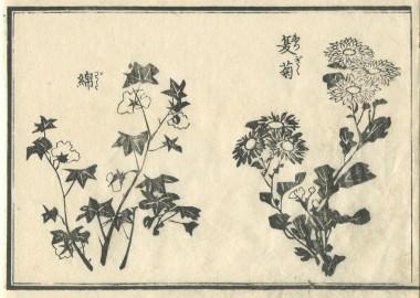 花鳥圓式26(kachouenshiki 26)