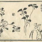 花鳥圓式31(kachouenshiki 31)