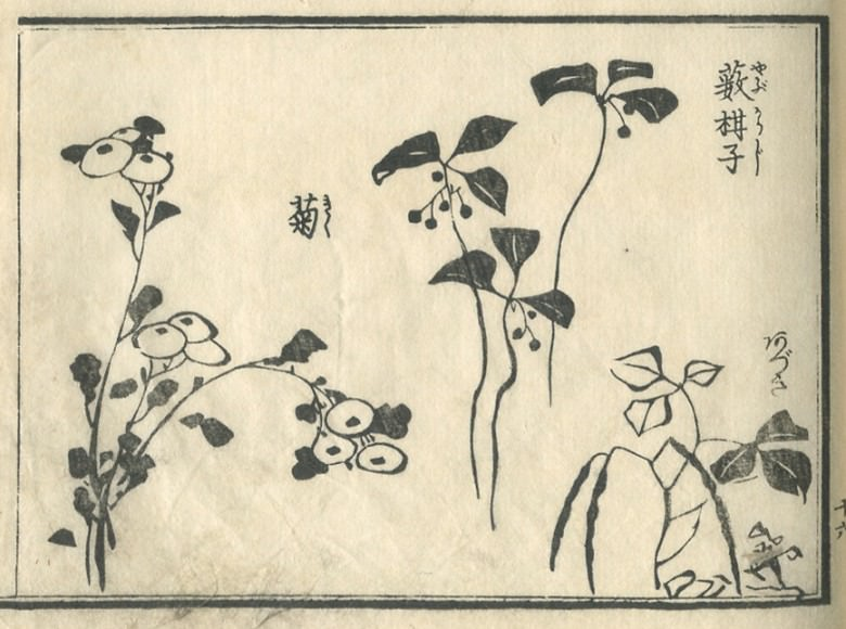 """chrysanthemum"" is drawn."