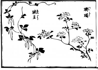 """An """"azalea"""" and """"garden peas"""" are drawn."""