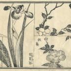 花鳥圓式42(kachouenshiki 42)