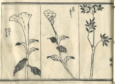 花鳥圓式43(kachouenshiki 43)