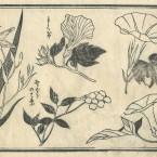 花鳥圓式44(kachouenshiki 44)