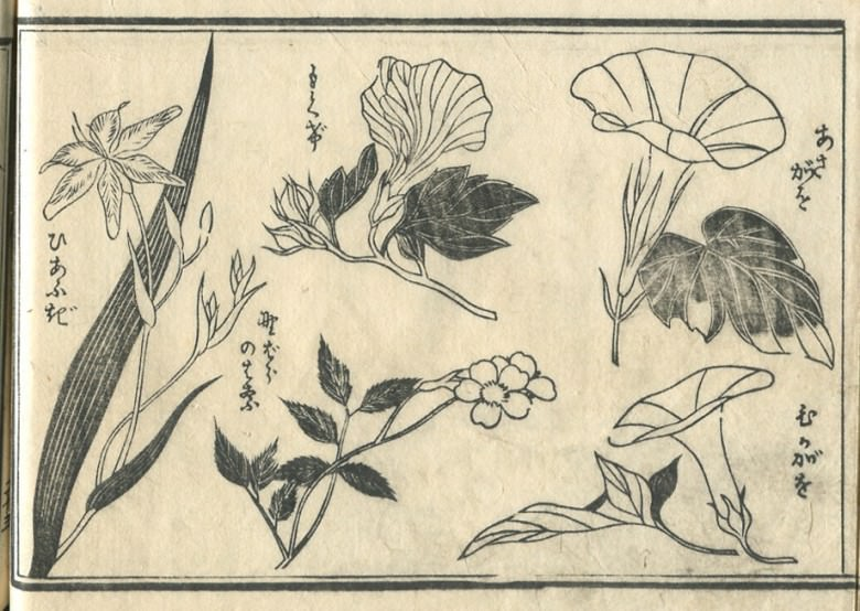 """Rose of Sharon"",""A wild cherry tree"",""morning glory""are drawn."