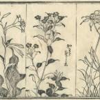 花鳥圓式45(kachouenshiki 45)