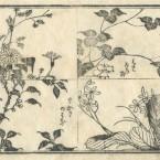 花鳥圓式46(kachouenshiki 46)