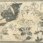 花鳥圓式47(kachouenshiki 47)