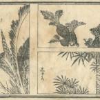 花鳥圓式50(kachouenshiki 50)
