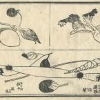 花鳥圓式52(kachouenshiki 52)
