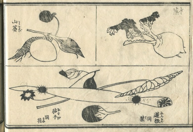 "A ""Japanese horseradish"", ""a turnip"", the ""eggplant"", the ""flower of an eggplant"", the ""lotus root"", and the ""leaf of the lotus root"" are drawn."