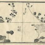 花鳥圓式54(kachouenshiki 54)
