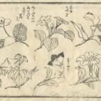 花鳥圓式56(kachouenshiki 56)