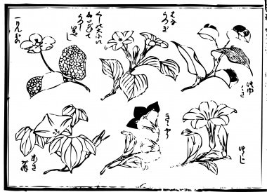 """An """"apple"""", """"deutzia"""", """"the day flower"""", """"the morning glory """", the """"Chinese bellflower"""", and the """"azalea"""" are drawn"""