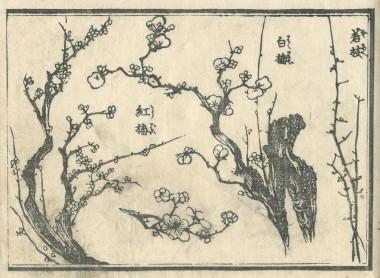 花鳥圓式5 (kachouenshiki 5)