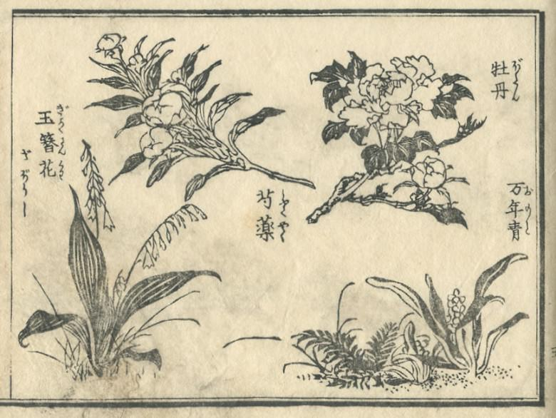 """A """"peony"""", """"Rohdea japonica"""" and a """"peony"""", and """"Hosta"""" are drawn)"""