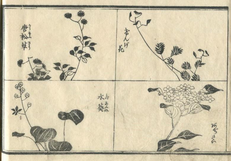 """Larch grass"", ""biennial grass"", ""Mizu-aoi"", and a ""hydrangea"" are drawn."