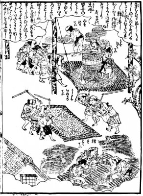 Scenery in which people who perform a thresh and rice cleaning of the Edo period are.